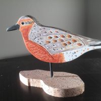 Red Knot Left Steve Valleau